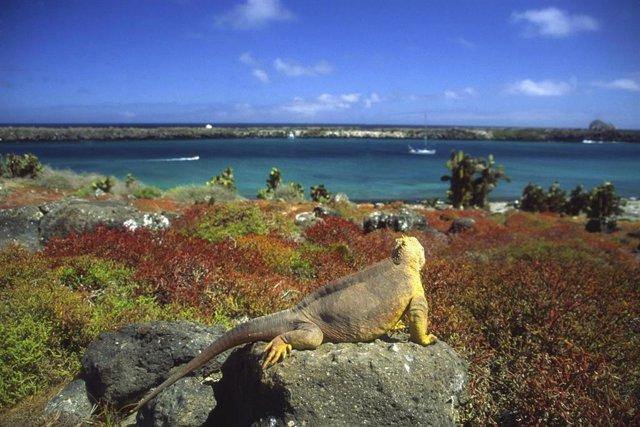 Islas Galápagos. Iguana