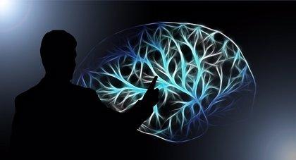 Las fluctuaciones rítmicas en la actividad cerebral ayudan al cerebro a actuar como un GPS
