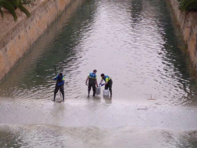 Técnicos de Emaya trabajando en el tratamiento de aguas en el torrente de Sa Riera