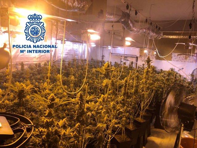 Granada.- Sucesos.- Dos detenidos por el cultivo de 265 plantas de marihuana en