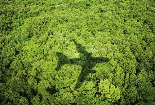 Avión sobrevuela un bosque