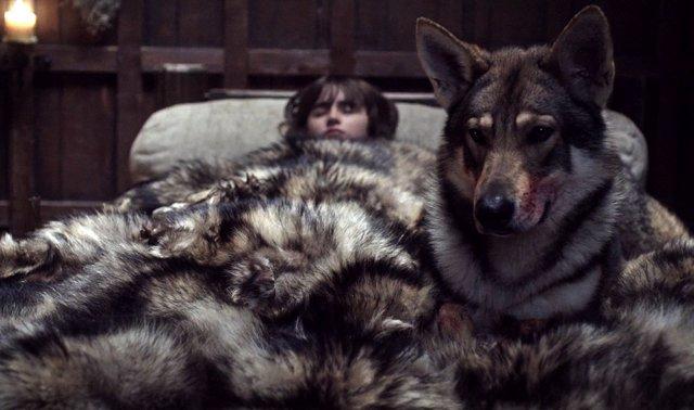 Verano, el huargo de Bran en Juego de tronos