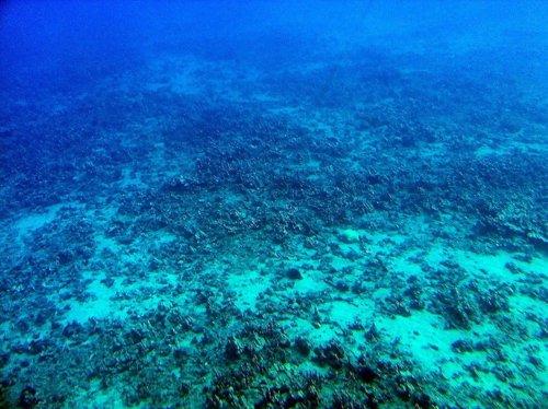 Fondo océanico