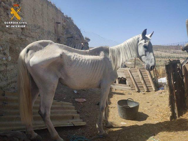 Estado en que se encontró el caballo en esta finca en Épila.