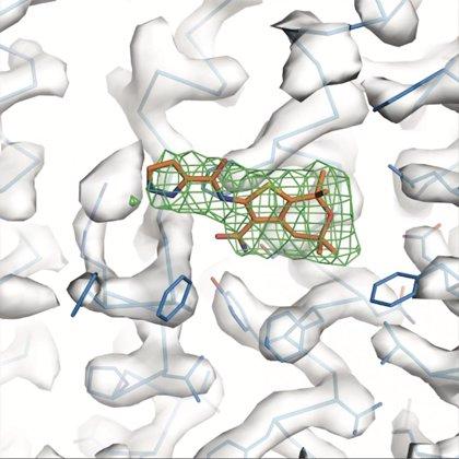 Una 'nueva' proteína puede abrir nuevas puertas en el tratamiento de la fibrosis quística