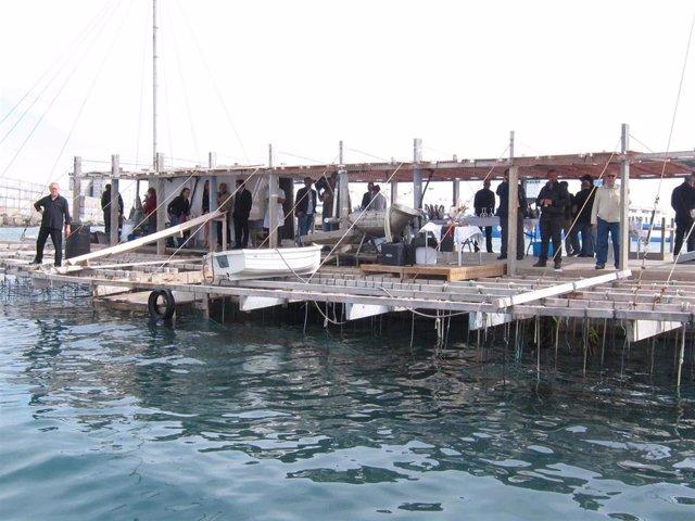 Batea para la cría de clóchinas en el puerto de Valencia