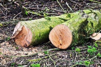 Colombia reduce por primera vez en más de una década la tala de bosques