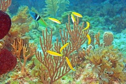 Un estudio revela los secretos del cambio de sexo en los peces, que podría tener implicaciones médicas