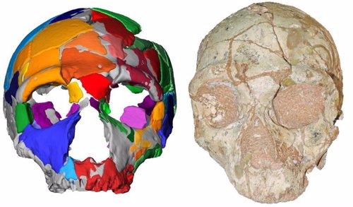 Cráneo Apidima 2 a la derecha, y su reconstrucción a la izquierda