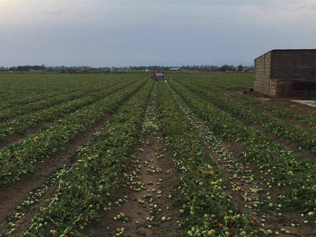 Agroseguro estima daños en más de 100.000 hectáreas por los pedriscos de las tormentas en los dos últimos días