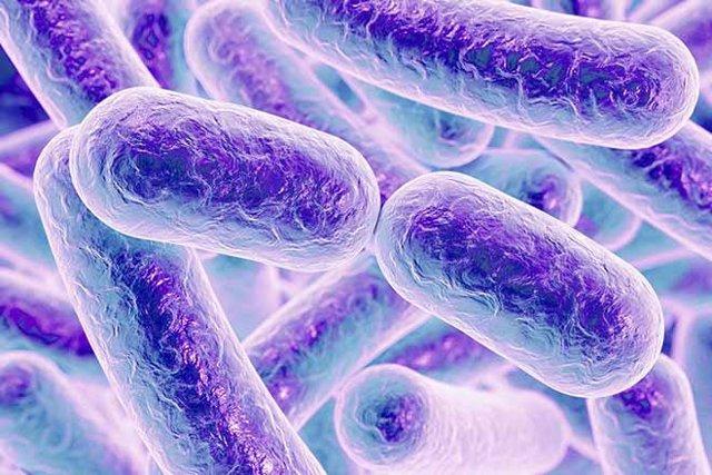 Microbiota, microbioma intestinal