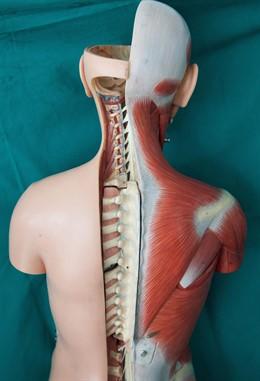 Médula espinal infografía