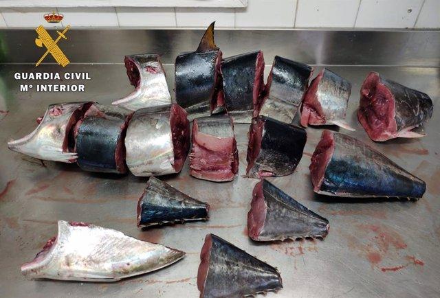 Piezas de atún pescadas ilegalmente decomisadas