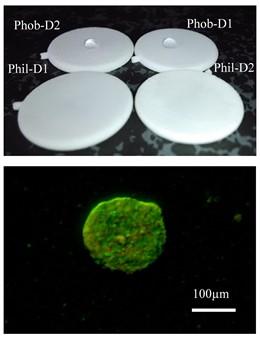 Evalúan varios sistemas de encapsulación celular con tecnologia 3D para diabetes tipo 1