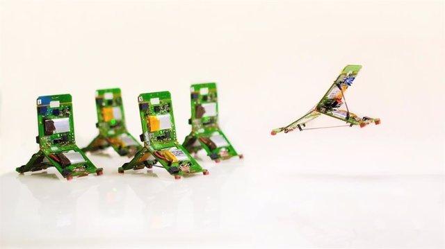 Robots inspirados en hormigas