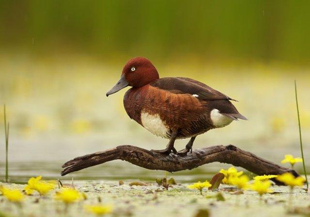 Aves en l'Albufera