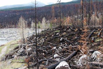 Más de 100 grandes fuegos forestales desde junio en latitudes árticas