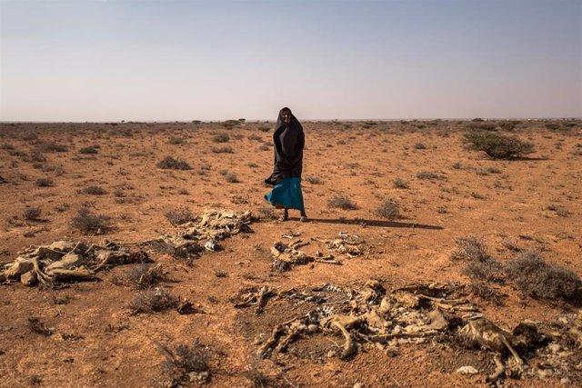 Una mujer afectada por la sequía en Somalia
