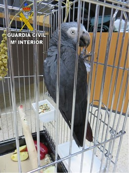 Loro gris enjaulado en el local de una asociación cannábica en Las Palmas de Gran Canaria