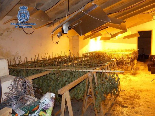 Imagen del laboratorio de marihuana hallado en una casa de Maria de la Salut.