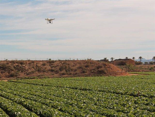 Sector hortofrutícola murciano, campo, drone