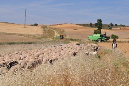 La dispersión de semillas por el ganado y polinizadores mejora la diversidad genética de las plantas