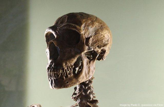 Cráneo de un humano moderno