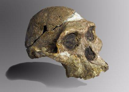 Humanos extintos probablemente amamantaban a sus crías hasta el año