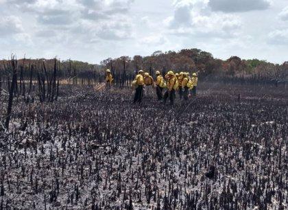 Dos incendios devastan la reserva de la biosfera mexicana Sian Ka'an, declarada Patrimonio Natural de la Humanidad