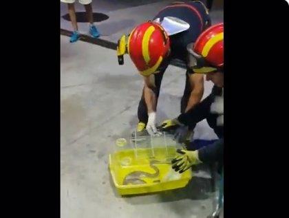Bomberos recuperan una culebra de escalera junto al surtidor de una gasolinera de Valladolid