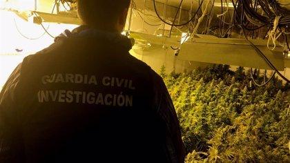 Dos investigados y 1.200 plantas de marihuana intervenidas en una operación en Santa Fe (Granada)