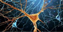 En la enfermedad de ELA las neuronas motoras de la médula espinal dejan de funcionar y provocan la parálisis progresiva de todo el cuerpo