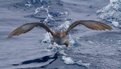 SEO/BirdLife pide limitar el crecimiento residencial y turístico en Baleares