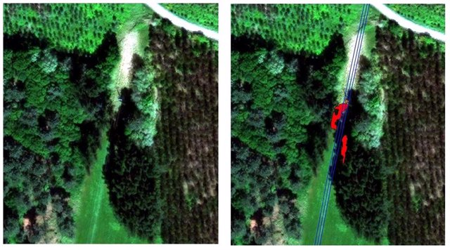 Proyecto innovador para la gestión de masas forestales en las líneas eléctricas