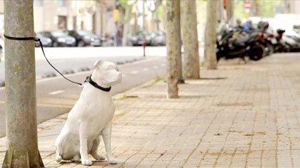 Un total de 138.000 perros y gatos fueron abandonados en España en 2018, según la Asociación Española de Veterinarios