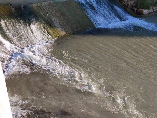 Imagen de los barbos tratando de remontar el curso del río Segura