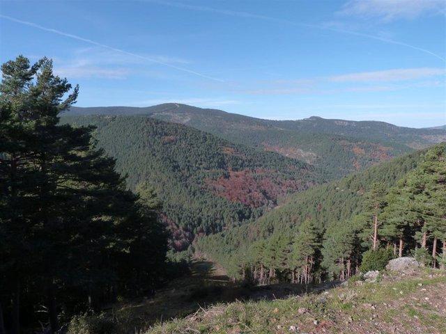 Paisaje del Parque Natural de Sierra de Cebollera, en La Rioja.