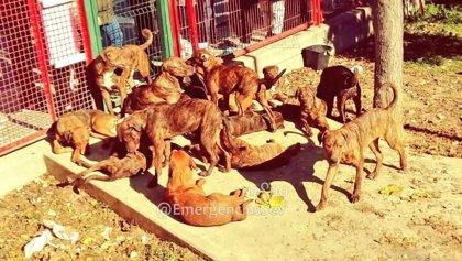 Más de 445.000 firmas reclaman el fomento de la esterilización gratuita de animales