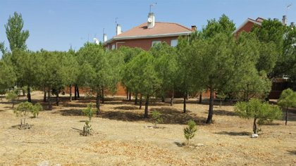 Un vecino de 79 años de Villaviciosa de Odón planta más de 100 pinos con el nombre de niños y mujeres de la localidad
