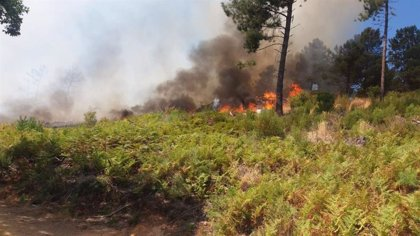 Declarado el nivel 1 de peligrosidad por un incendio en Torrecilla de los Ángeles