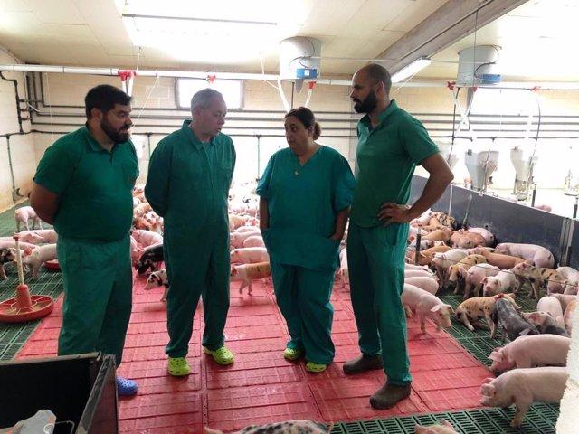 El director xeral de Gandaría visita una granja de porcino