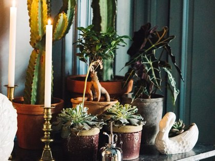 Sally Hambleton nos da los consejos perfectos para cuidar tus plantas en vacaciones