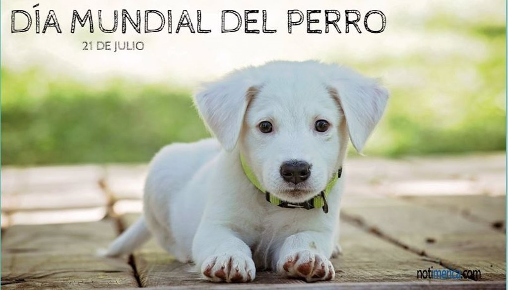 21 de julio: Día Mundial del Perro, ¿por qué se celebra hoy?