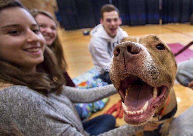 Estudiantes acarician un perro.
