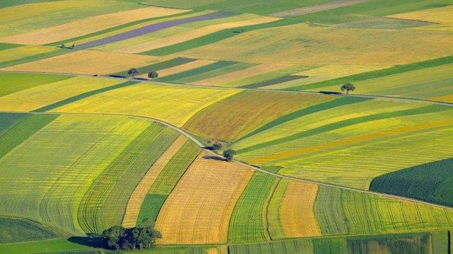 Concentración parcelaria, tierras, parcelas, agricultura