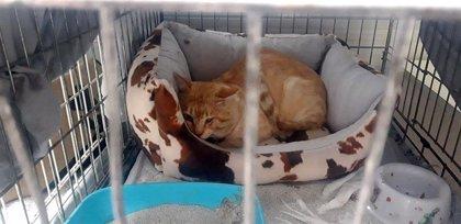 Aprobada la licencia de derribo del antiguo convento de Javerianos de Pamplona tras recoger una veintena de gatos