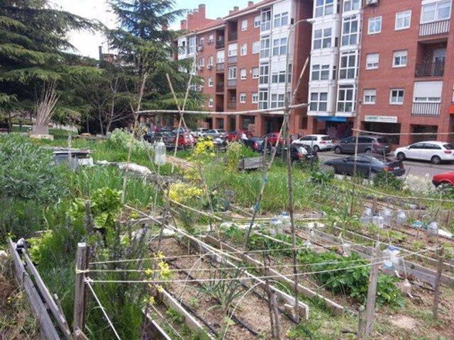 Huerto urbano Villa Rosa de la Rehdmad que se ofreció a colaborar en el estudio