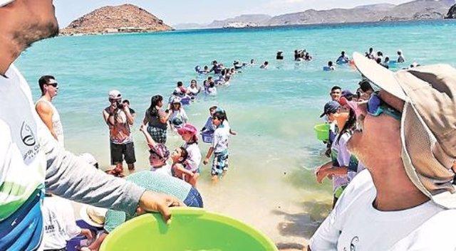 Cientos de ciudadanos ayudan a la liberación de crías de totoaba en el Golfo de California