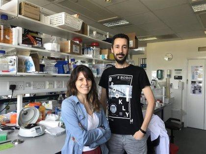 Científicos de la Universidad de Oviedo encuentran relación entre la microbiota intestinal y la longevidad