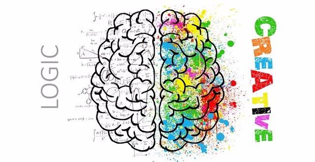 División del cerebro